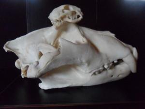 theskullguy's Profile Picture