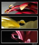Drops collage