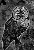 owl by Kalmusha