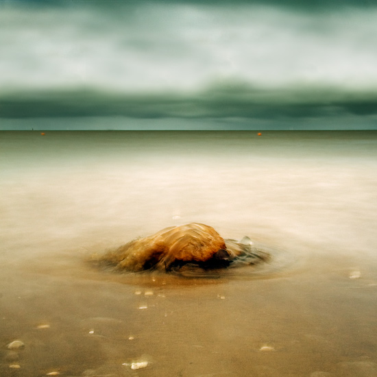 the jellyfish by julie-rc