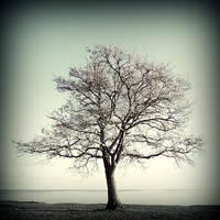 Arbor by julie-rc
