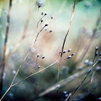 untitled by julie-rc