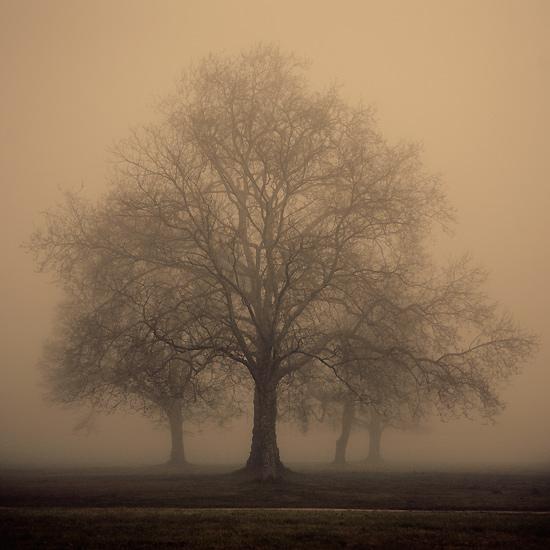 Arbor ... by julie-rc