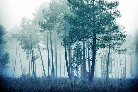 Cold forest ...