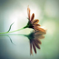 a flower .... by julie-rc