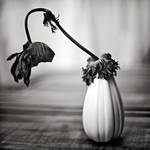Nature morte by julie-rc