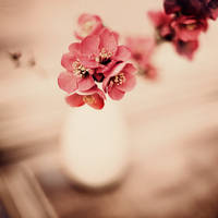 Nature morte II by julie-rc