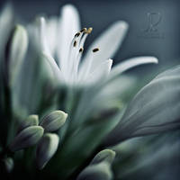Emergence ... by julie-rc