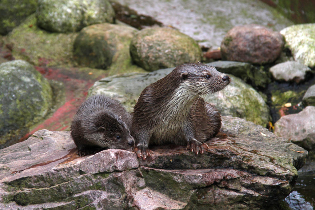 Mother and baby otter by BetaDraconis