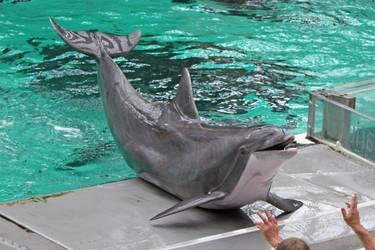 Cetaceans by BetaDraconis on DeviantArt