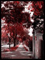 Street... by alqxd