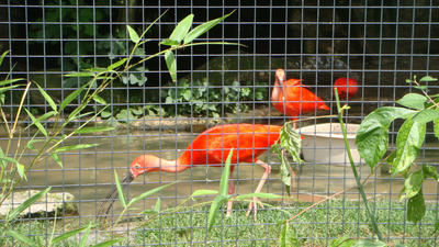 in Switzerland- basel zoo by santa-qween