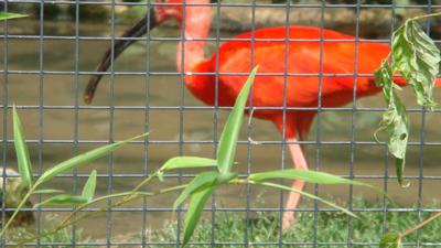 Switzerland- basel zoo by santa-qween