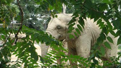 Elephant by santa-qween