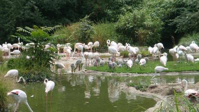 Flamingo family by santa-qween