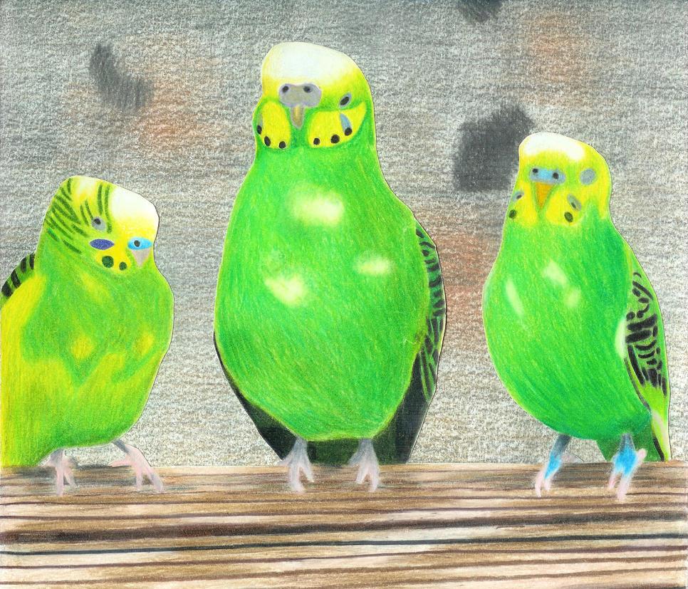 Prismacolor Parakeets by Golden-Sun23