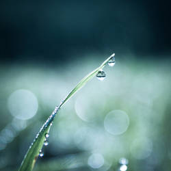 Grass droplets I by Virfir
