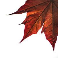Leaf by Virfir