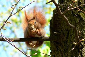 Nuts Eater by Virfir