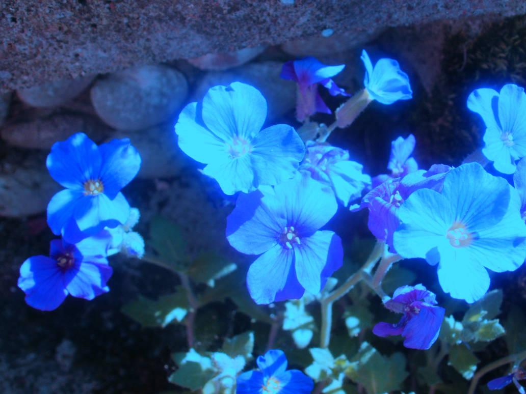 Ultraviolet Flowers by DemonsWrathPhotos ...