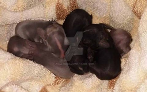 Baby Bunnies by Aralyn187