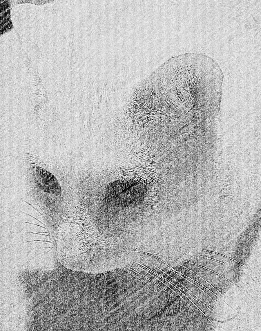 kitley by figureeight77
