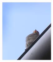 Birdie 2 by AMPhitheatre