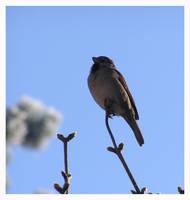 Birdie 3 by AMPhitheatre