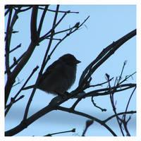 Birdie 4 by AMPhitheatre