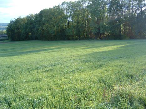 Meadowstock 2