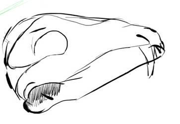 Skull Sketch by Szefierky