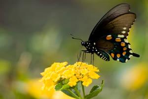 butterfly by jwischka