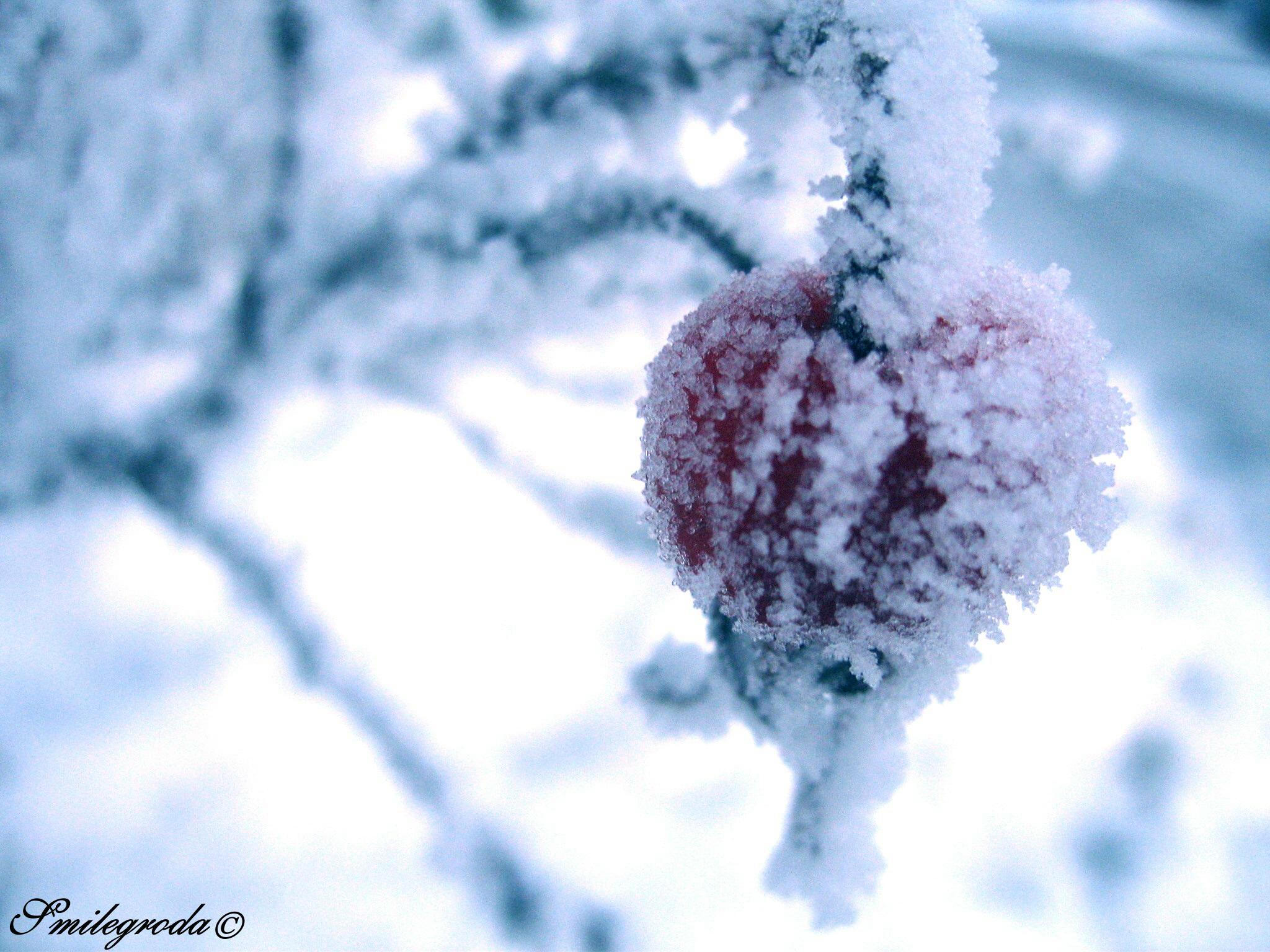 Frozen Heart By Smilegroda On DeviantArt