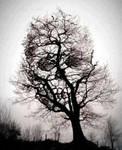 Another Skull Tree
