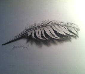 3D feather with video of process