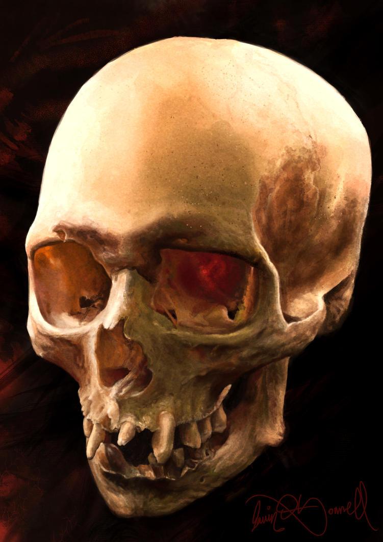 Skull Study by XeNzO