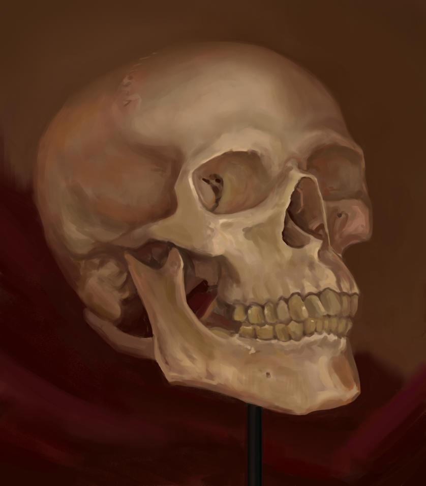 Painting a skull from life - process video by XeNzO