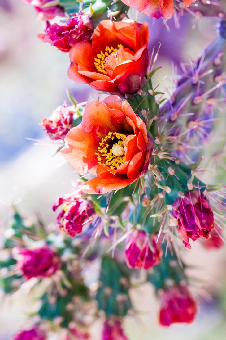 Springtime Summertime by kendraknittel