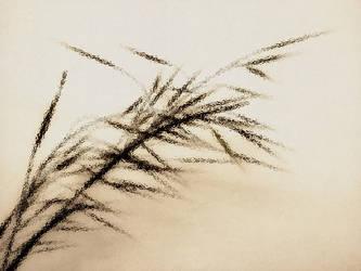 Bamboo by HeyyGirl
