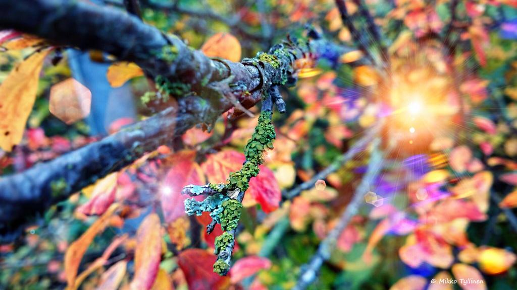 Autumn by Mishelangello