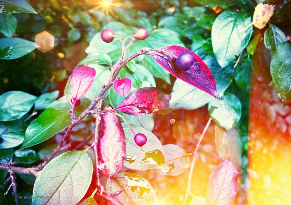 Autumn berries by Mishelangello