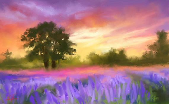 Dreamy dawn