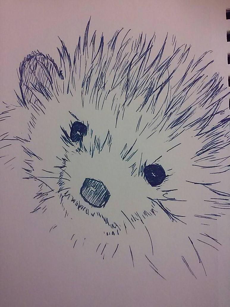 Hedgehog by Kora-Ravenheart