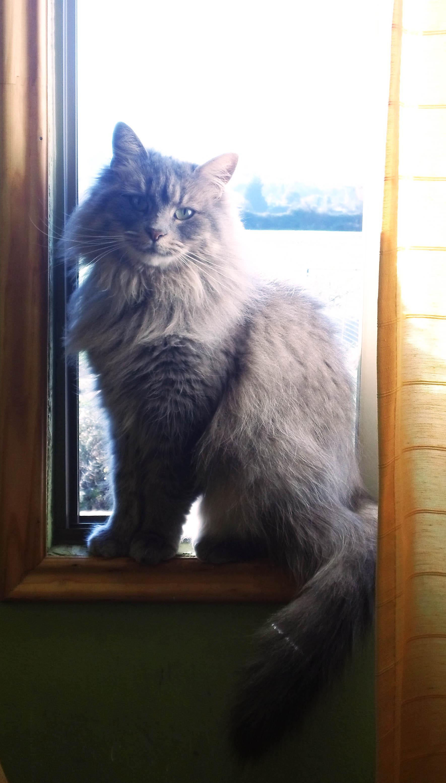 ChencoIlufi's Profile Picture