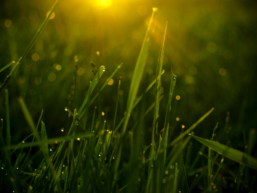 Dew Drops and Sunshine by ViridianRoses