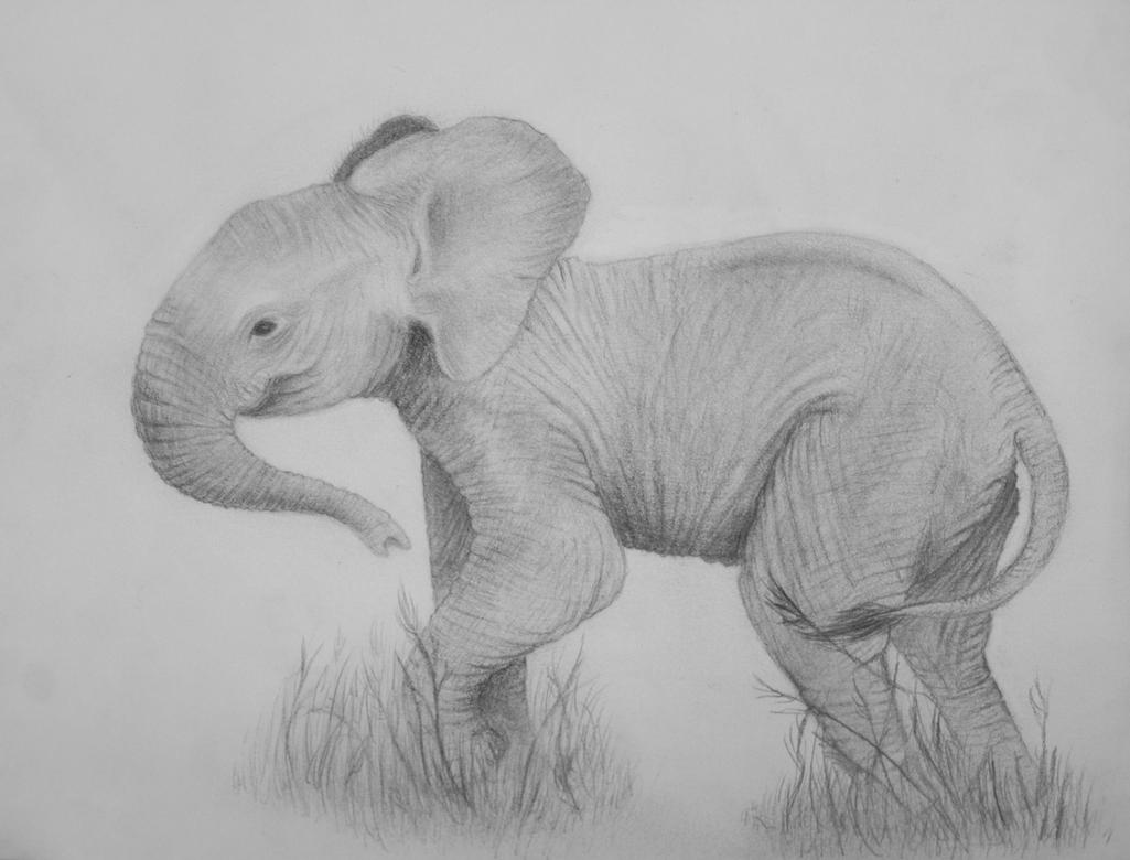 Baby Elephant by ViridianRoses
