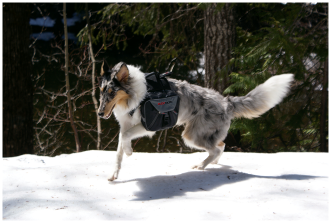 Lark - Snow Dog by starwide