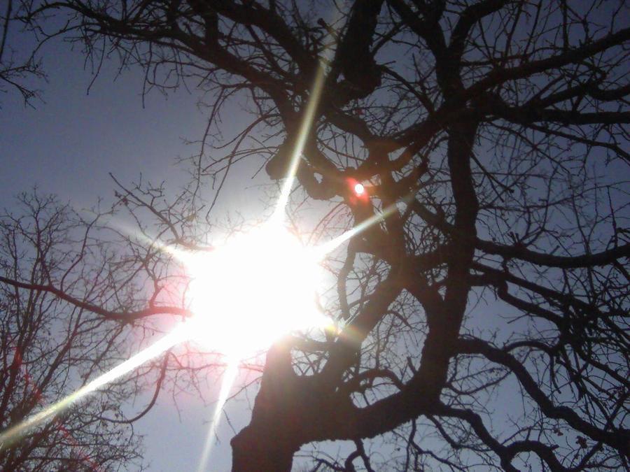 through the tree by sheppaja