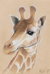 Giraffe by Tarragon-8