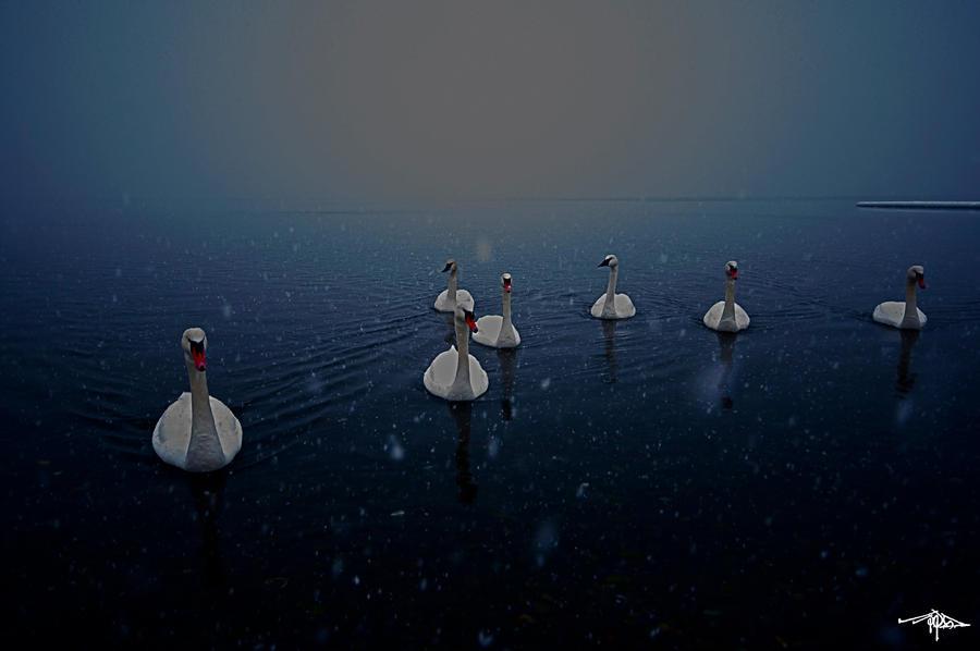 Seven Swans by JJDominic